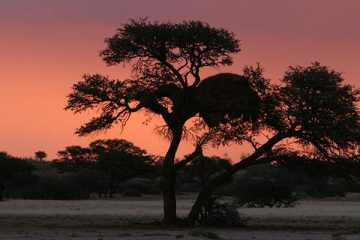 Exploring Namibia