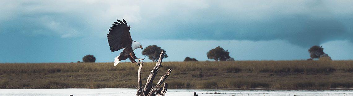 Botswana cover
