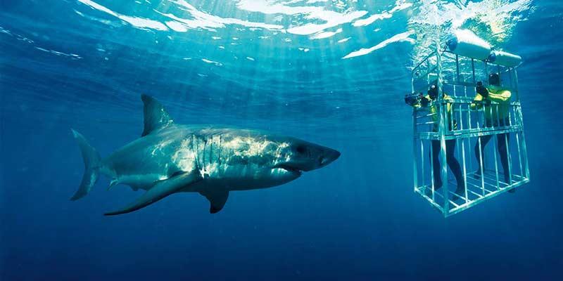 Cape Agulhas shark cage diving