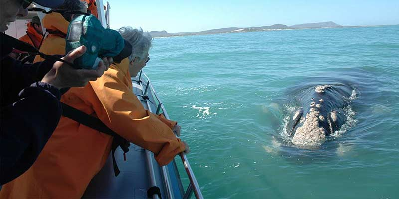 Overberg whale watching