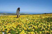 West Coast flora