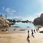 Boulders Beach Penguins