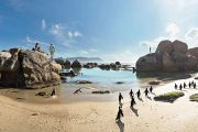 Boulders Beach Penguins
