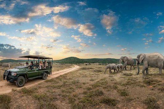 safari elephant zebra