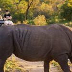 KwaZulu Natal Safari