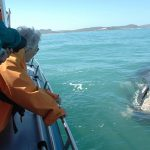 Overberg Whale Viewing