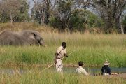 Moremi Game Viewing