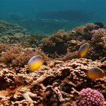 Mauritius Diving