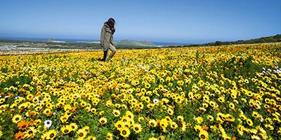 West Coast floral