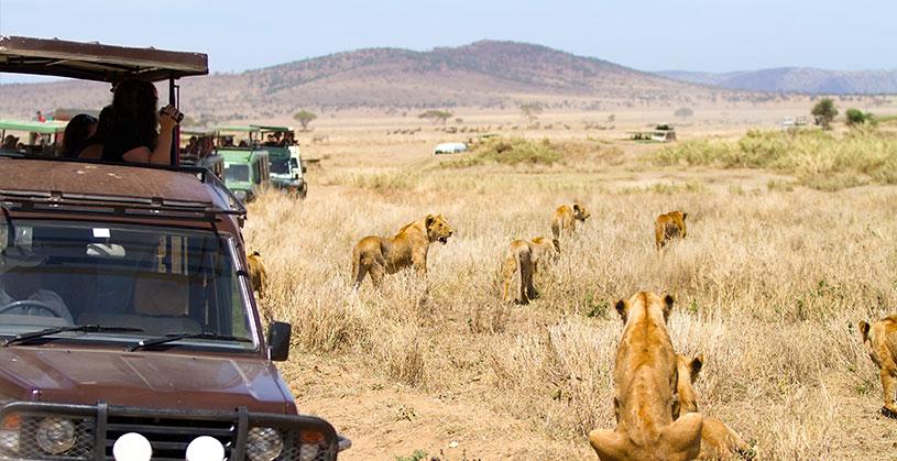 african-safari-drive